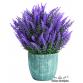 Bodur İngiliz Lavanta Çiçeği Tohumu ( Munstead Strain ) ( 20 Adet Tohum )