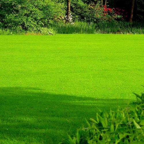 Çim Tohumu Karışımı Sıcaklığa Dayanıklı - 1 Kg